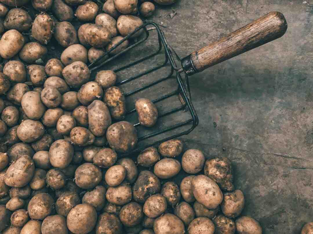 Comment planter des patates