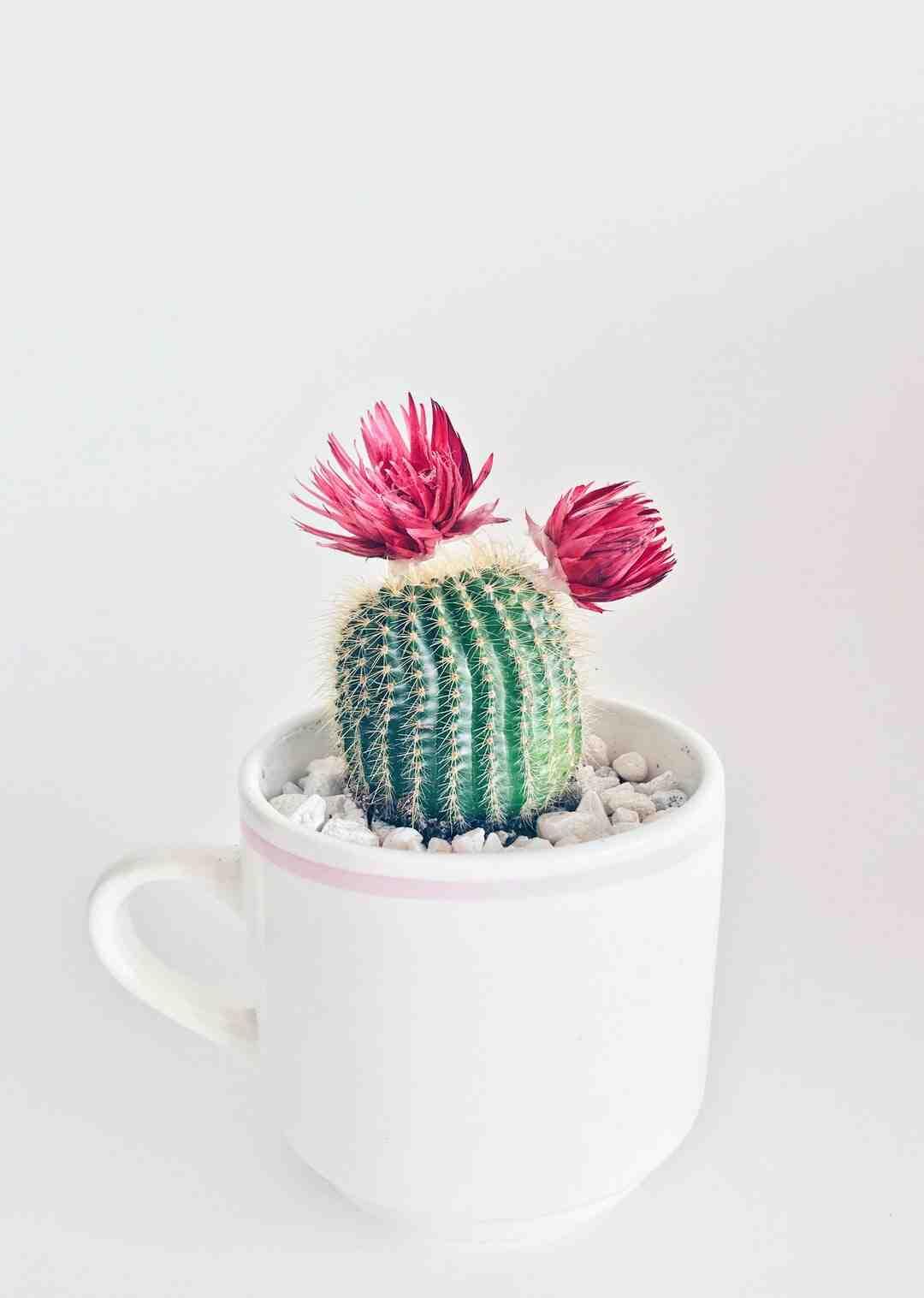 Comment tailler un cactus