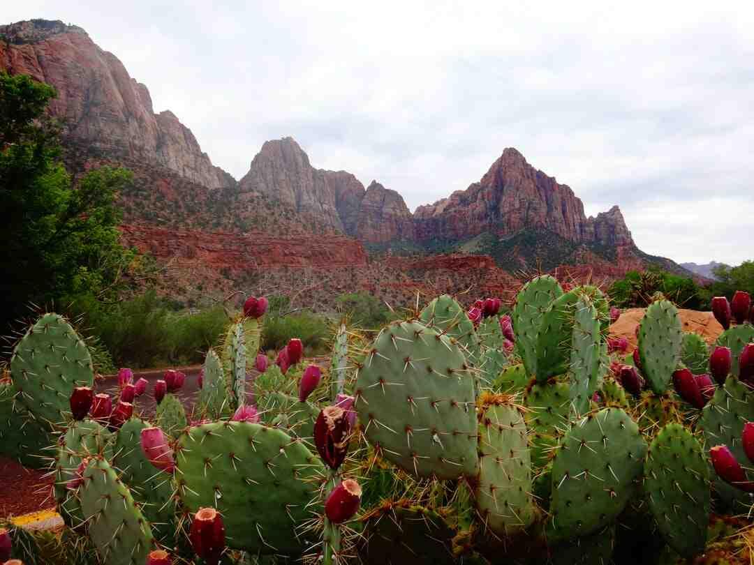 Quand arroser un cactus après rempotage ?