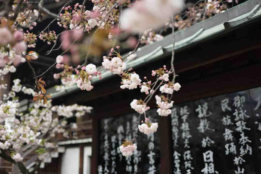 Quelle exposition pour un cognassier du Japon ?
