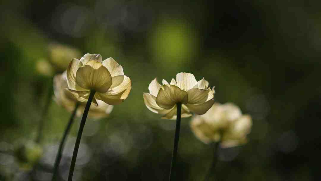 Pourquoi mes vivaces ne fleurissent pas ?