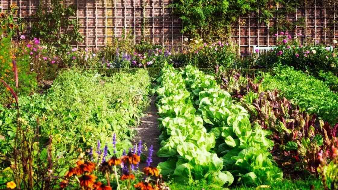Quand planter les légumes au Québec ?