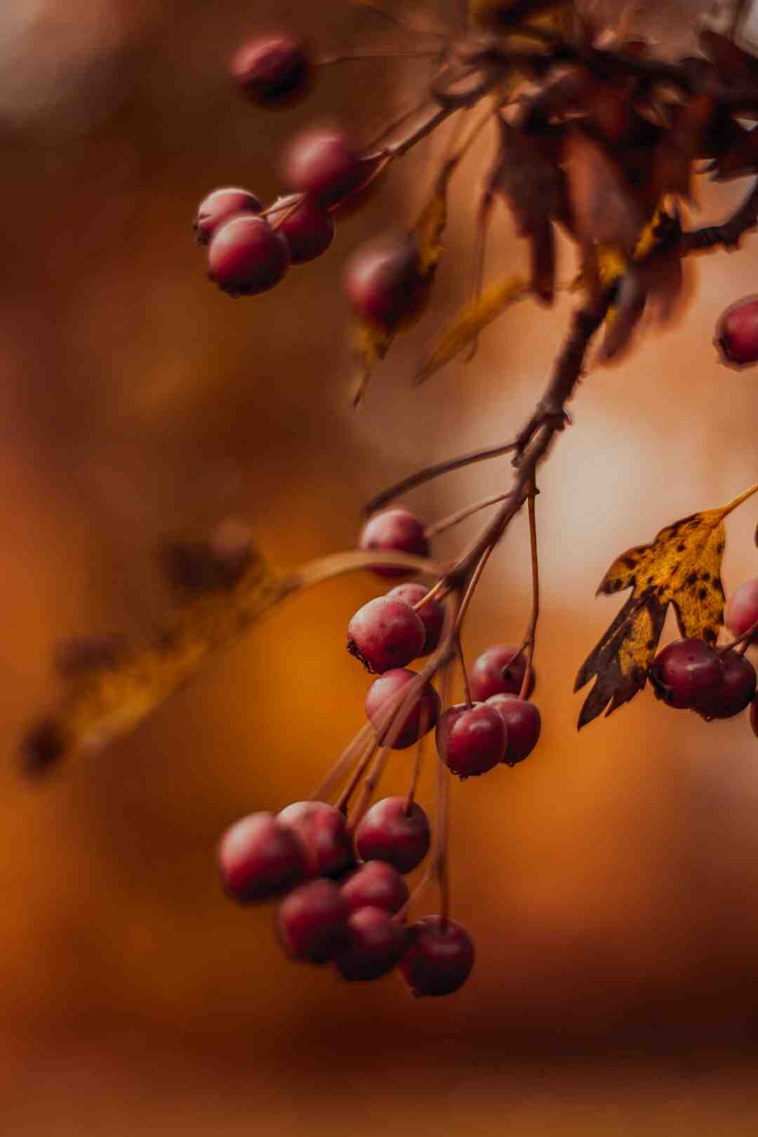 Quel fruitier planter en automne ?