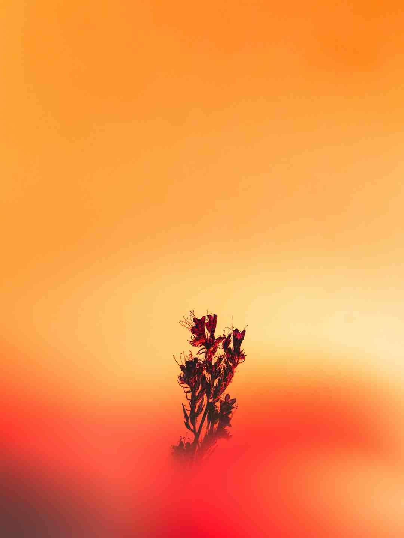 Quelle fleur en bac plein soleil ?