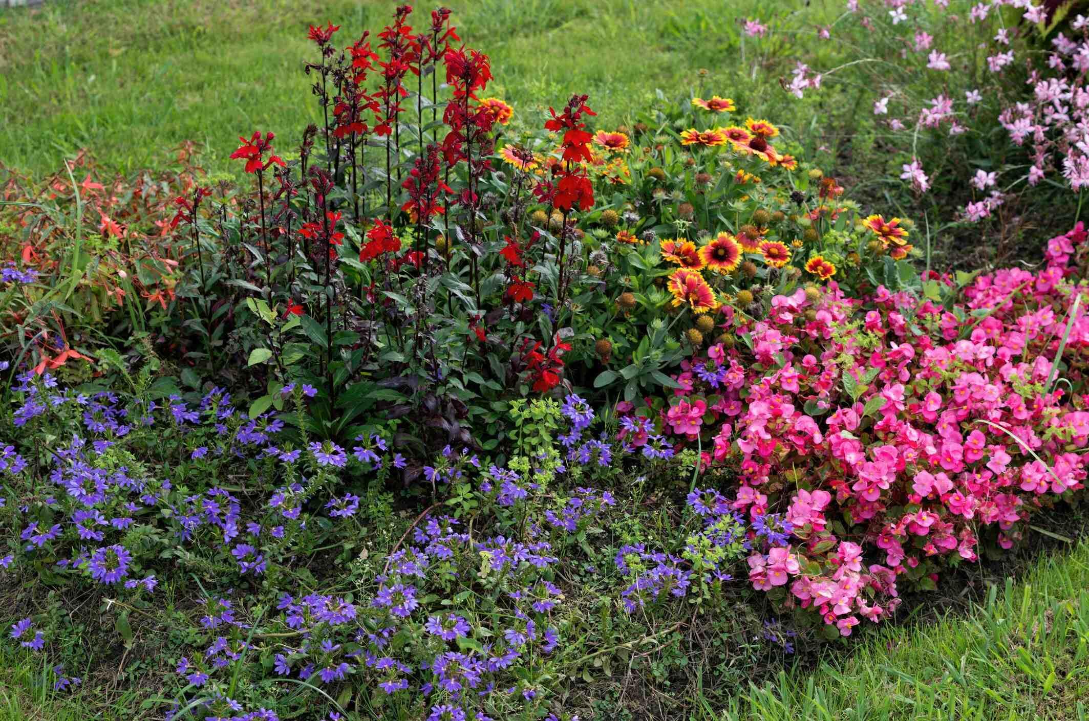 Quelle plante planter en été ?